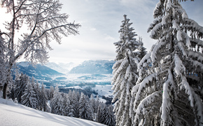 winter, ate, forest, Mountains, valley