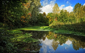 summer, sky, swamp, Trees