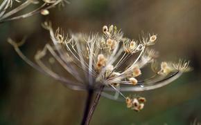 Dcembre, semence, Fleurs sches