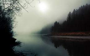 nature, forest, river, fog