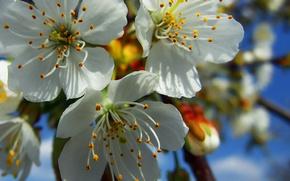 пестики,  тычинки,  лепестки,  бутоны,  цветение