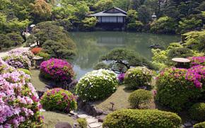 Blumen, Japanischer Garten, Htte