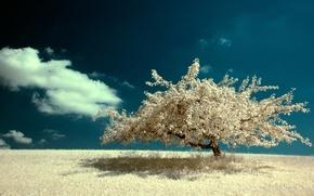 solitaire, arbre, dans le champ