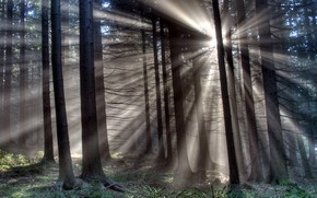 forest, Trees, Rays, light