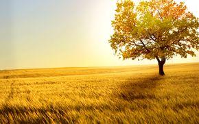 champ, Or, bl, vent, pillets, solitaire, arbre, horizon, porte