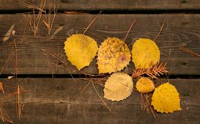 листья,  желтые,  доски,  осень,  иглы сосновые,  прожилки