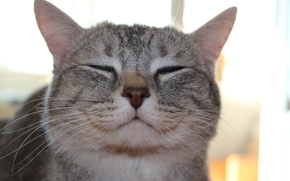 cat, murrr, meow