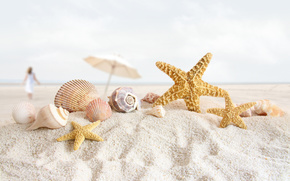 пляж,  песок,  морская звезда,  ракушки,  раковины