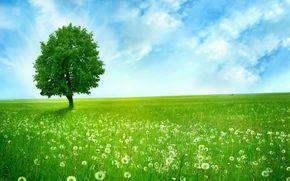 vert, champ, porte, solitaire, arbre, bleu, ciel, nuages, pissenlits