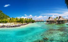 oceano, mare, palma, tropici, case