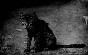 cat, tramp, battered, sad