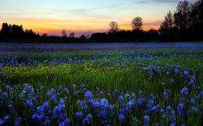 природа,  поле,  цветы,  роса,  утро