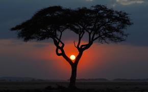 アフリカ, 夕方, ツリー, 夕日, ケニア, 風景, サバンナ, 太陽