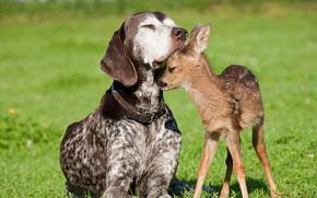 собака,  олененок,  дружба