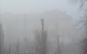 nevoeiro, rvores, construo