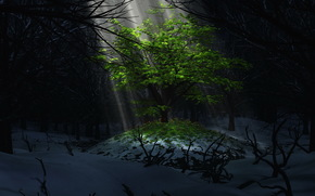 tree, light, foliage, snow