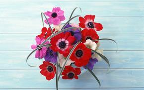 Flores, tabela, buqu, composio, vermelho