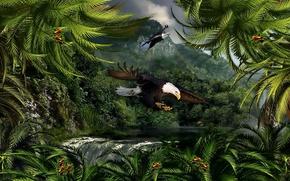 Природа,  джунгли,  орлан