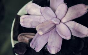 sabor, Ptalas, violeta