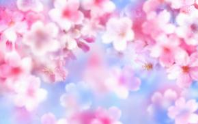 Flores, brilho, vero