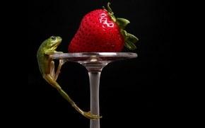 frog, strawberry