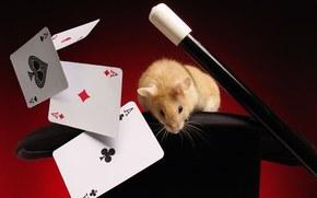 mouse, carte, mettere a fuoco
