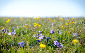 Alpine, meadow, field, dew, grass, Flowers