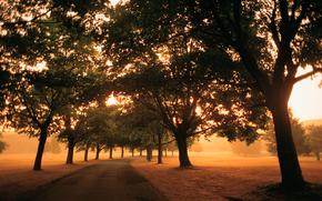 road, morning, fog, light, path, Trees, foliage, field