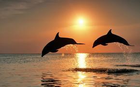 Dolphins, sunset, sea