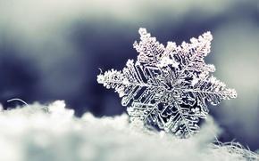 Macro, snow, snowflake