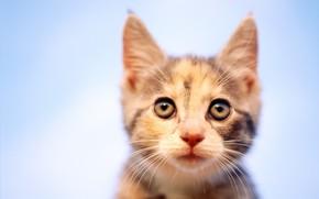 gattino, vista, mettere a fuoco