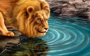 picture, predator, lion, водопой
