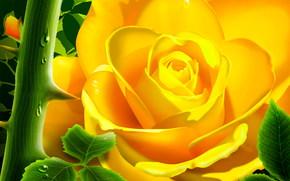 Garden, Flowers, rose, spikes