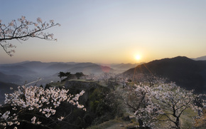 Japan, sunset, sakura, form