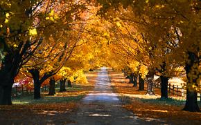 natura, stagioni, autunno, parco, alberi