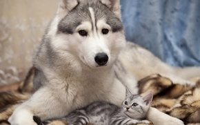 dog, kitten, friendship