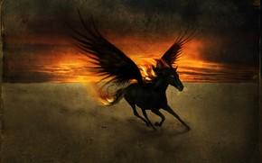 конь, крылья, закат