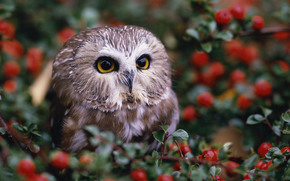 owl, Berries, shrubs