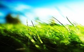 Green, grass, Blue Sky