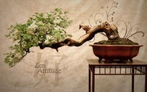 бонсай, япония, дерево, цветы