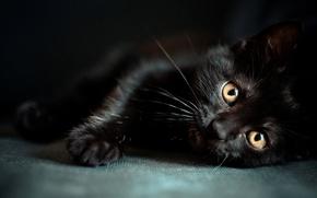 nero, gattino, grugno, occhi