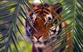 Tiger, Tiere, Filiale