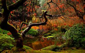 природа,  осень,  японский,  сад,  парк,  мост,  люди