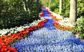 Holland, Flowers, road, footpath, sun, Tulips, forest, greens