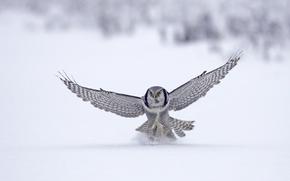 Tier, Vogel, Falke, Flug, Winter, Schnee
