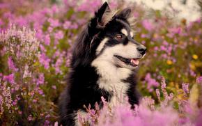 пёс,  кусты,  цветы