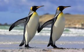 животные,  пингвины,  дружба,  любовь