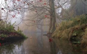 англия,  дерево,  осень,  река,  туман