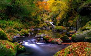 природа,  лес,  река,  ручей,  камни,  мох,  листья,  осень