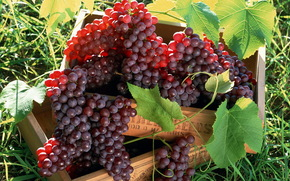 grapes, boxes, Berries, clusters
